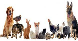 حيوانات اليفة , انواع الحيوانات الاليفة