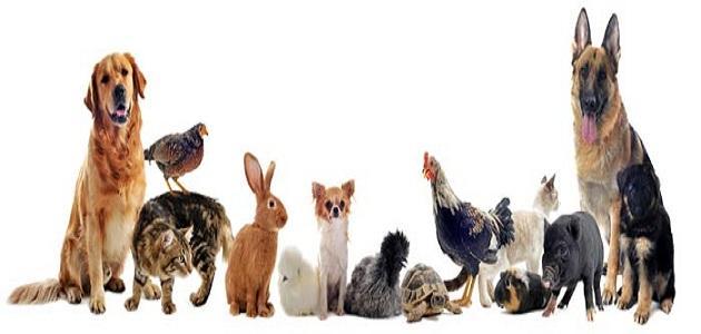 بالصور حيوانات اليفة , انواع الحيوانات الاليفة 2241