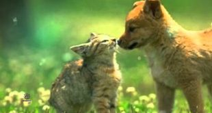بالصور صور حيوانات , اجمل صور حيوانات 2281 11 310x165