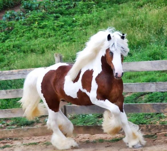 بالصور اجمل حصان في العالم , احلي خيول 2391 6