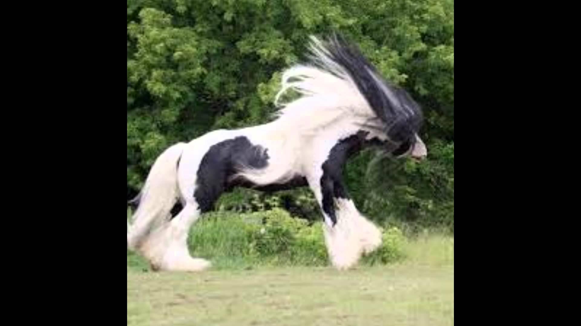 بالصور اجمل حصان في العالم , احلي خيول 2391 9