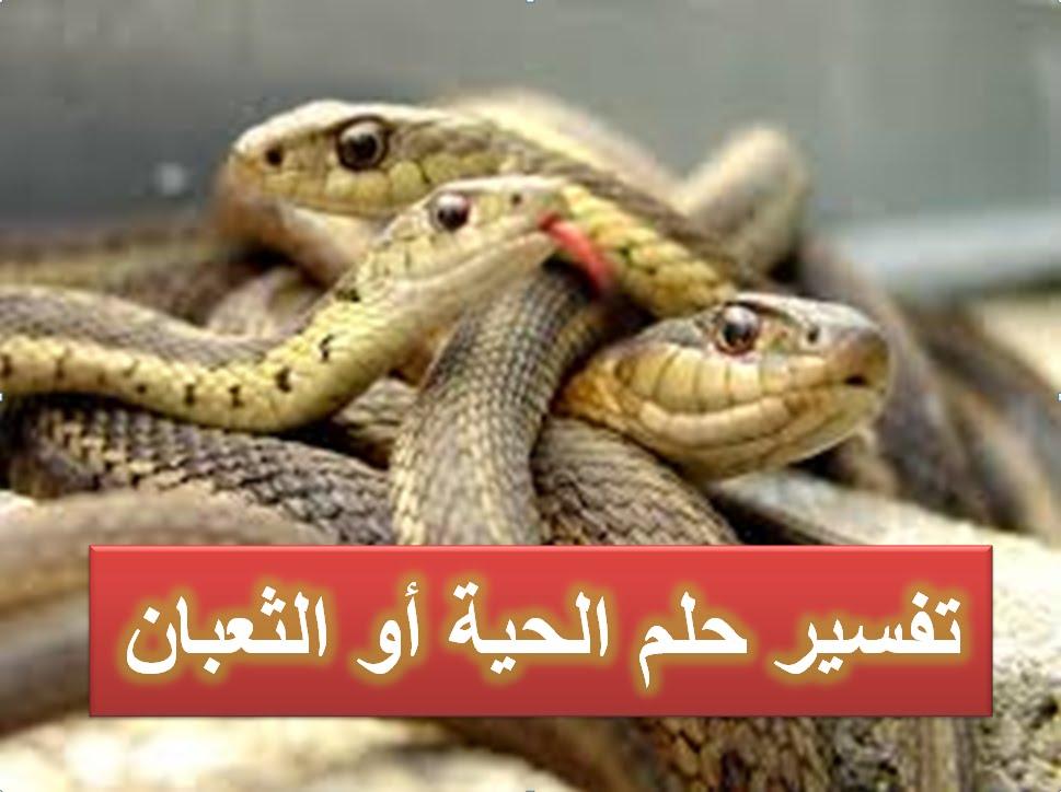 صور تفسير حلم الثعابين في البيت , تفسير منام