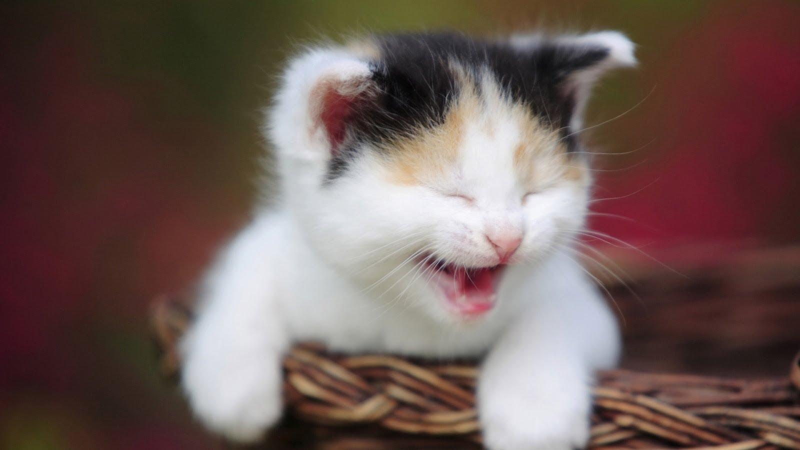 صور صور قطط مضحكة , اجمل صور القطط المضحكه