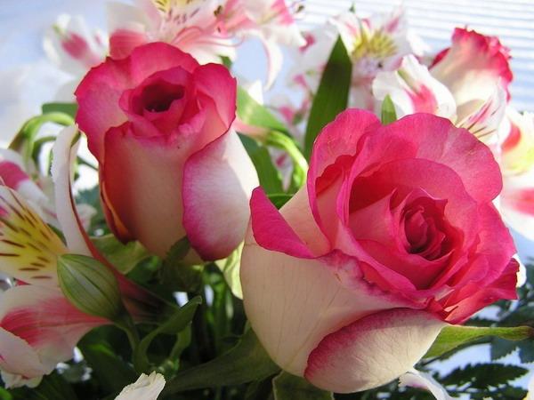 بالصور خلفيات زهور , خلفيات زهور للهواتف واجهزة الكمبيوتر 2903 2