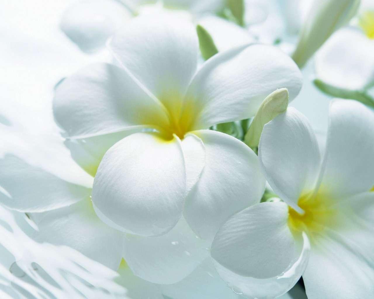بالصور خلفيات زهور , خلفيات زهور للهواتف واجهزة الكمبيوتر 2903 4