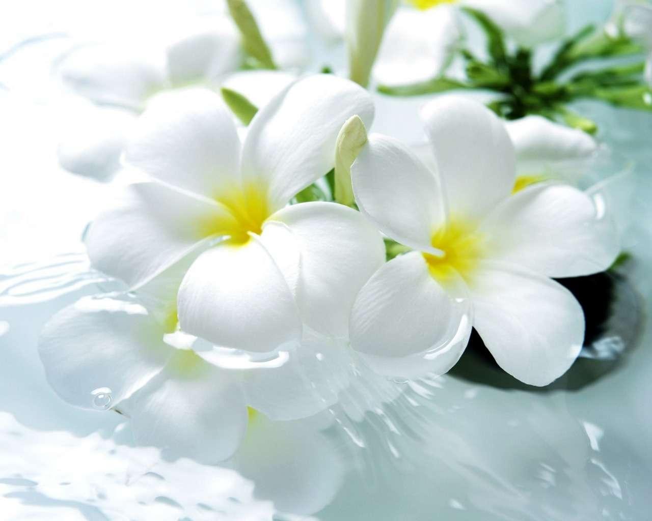 بالصور خلفيات زهور , خلفيات زهور للهواتف واجهزة الكمبيوتر 2903 5