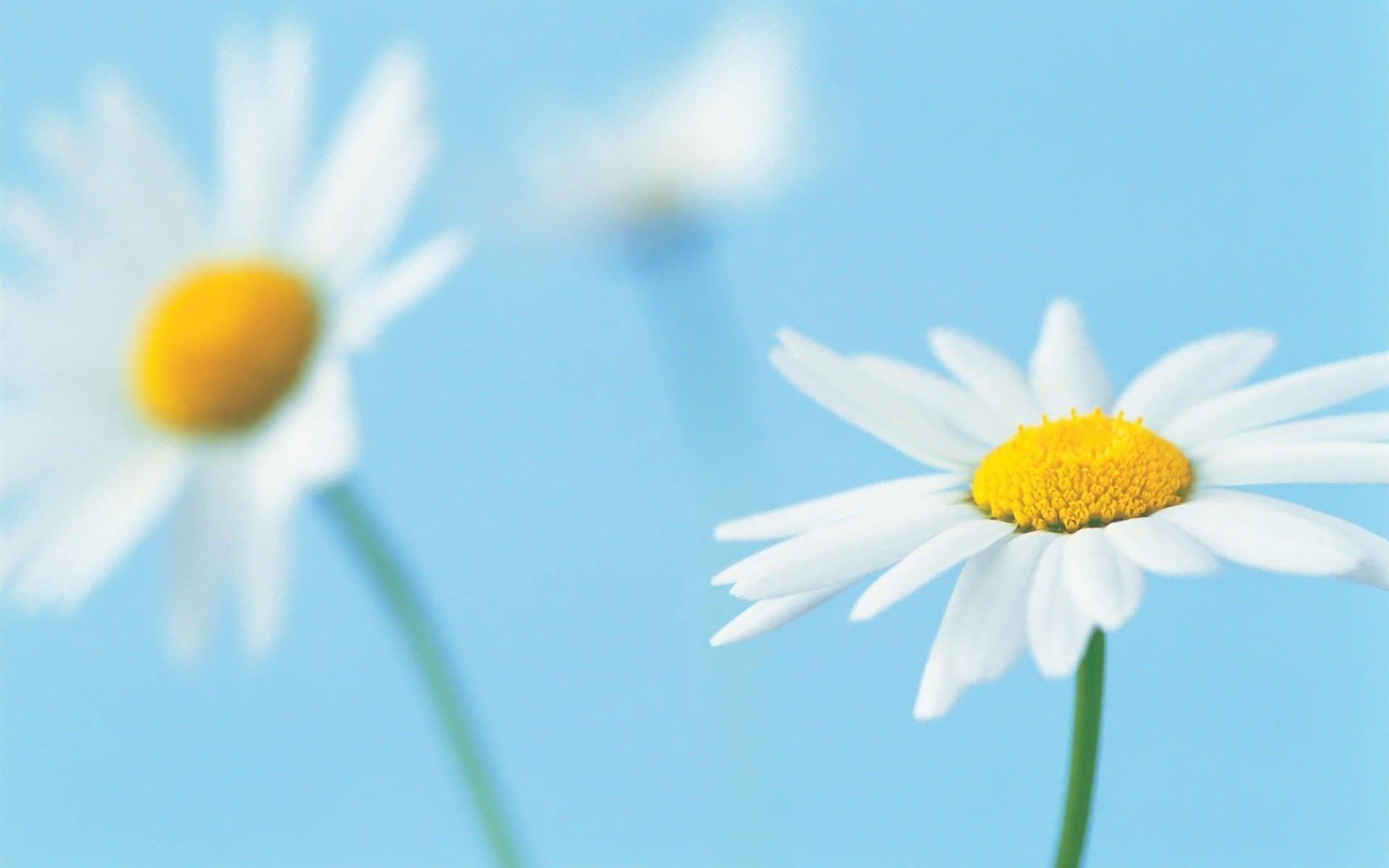 بالصور خلفيات زهور , خلفيات زهور للهواتف واجهزة الكمبيوتر 2903 6