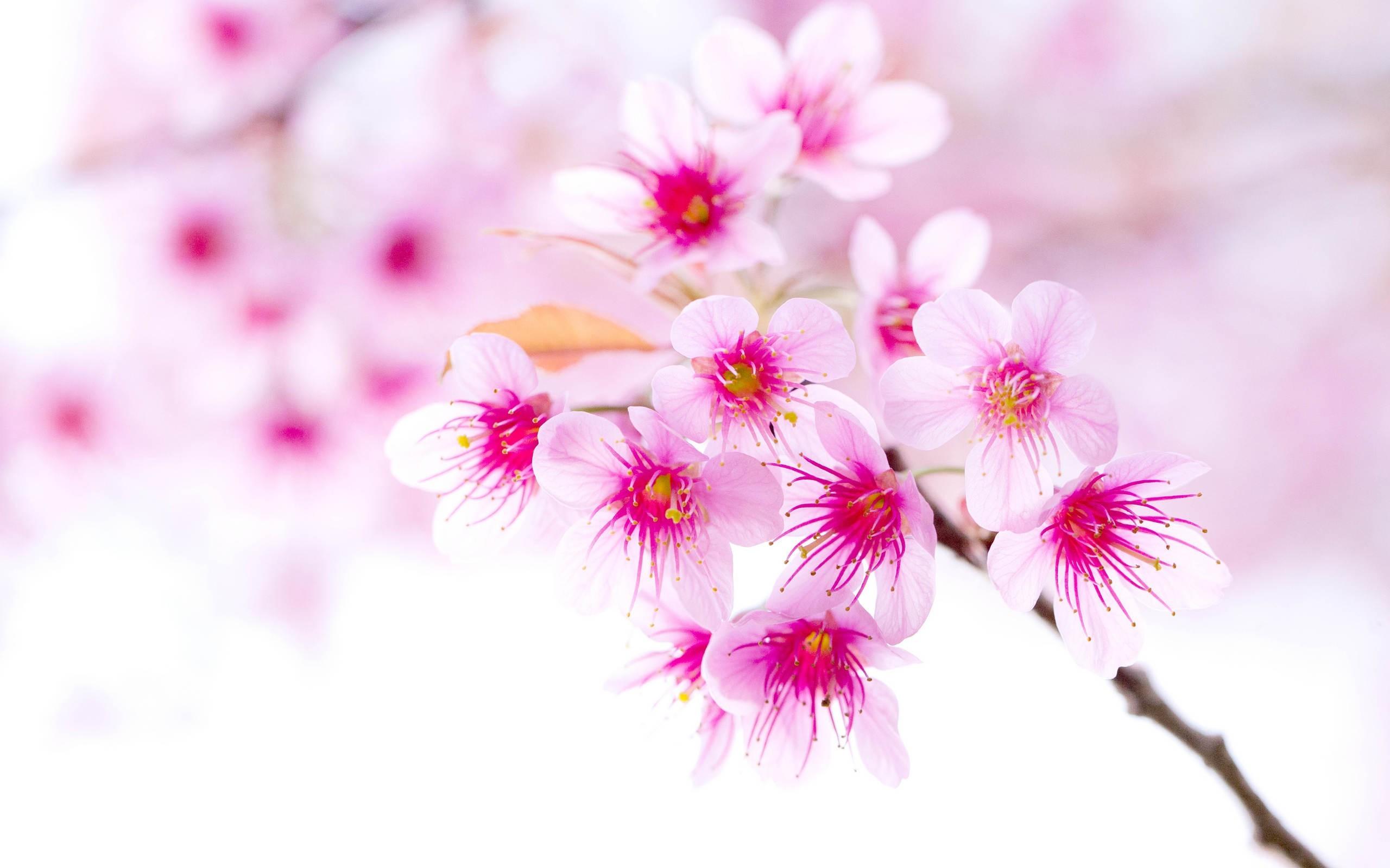 بالصور خلفيات زهور , خلفيات زهور للهواتف واجهزة الكمبيوتر 2903 8