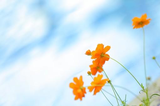 بالصور خلفيات زهور , خلفيات زهور للهواتف واجهزة الكمبيوتر