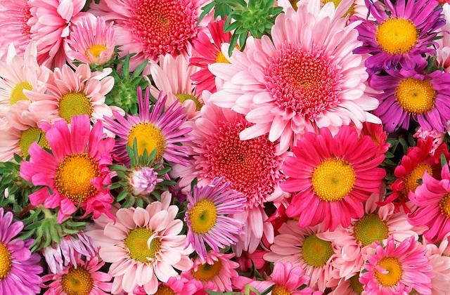 بالصور خلفيات زهور , خلفيات زهور للهواتف واجهزة الكمبيوتر 2903