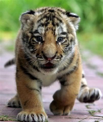 بالصور اجمل الصور للقطط في العالم , صور جميله للقطط في العالم 3105 1