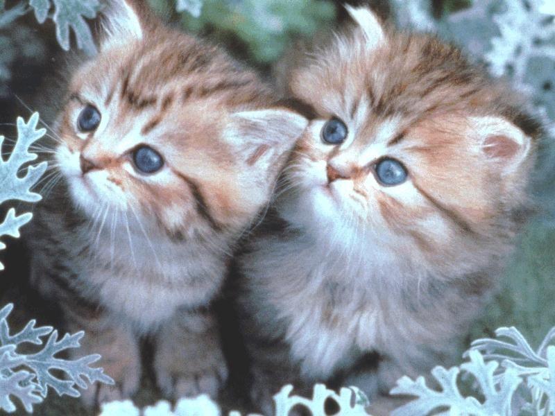 بالصور اجمل الصور للقطط في العالم , صور جميله للقطط في العالم 3105 11