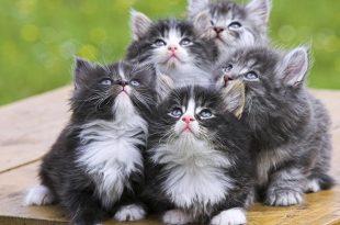بالصور اجمل الصور للقطط في العالم , صور جميله للقطط في العالم 3105 13 310x205