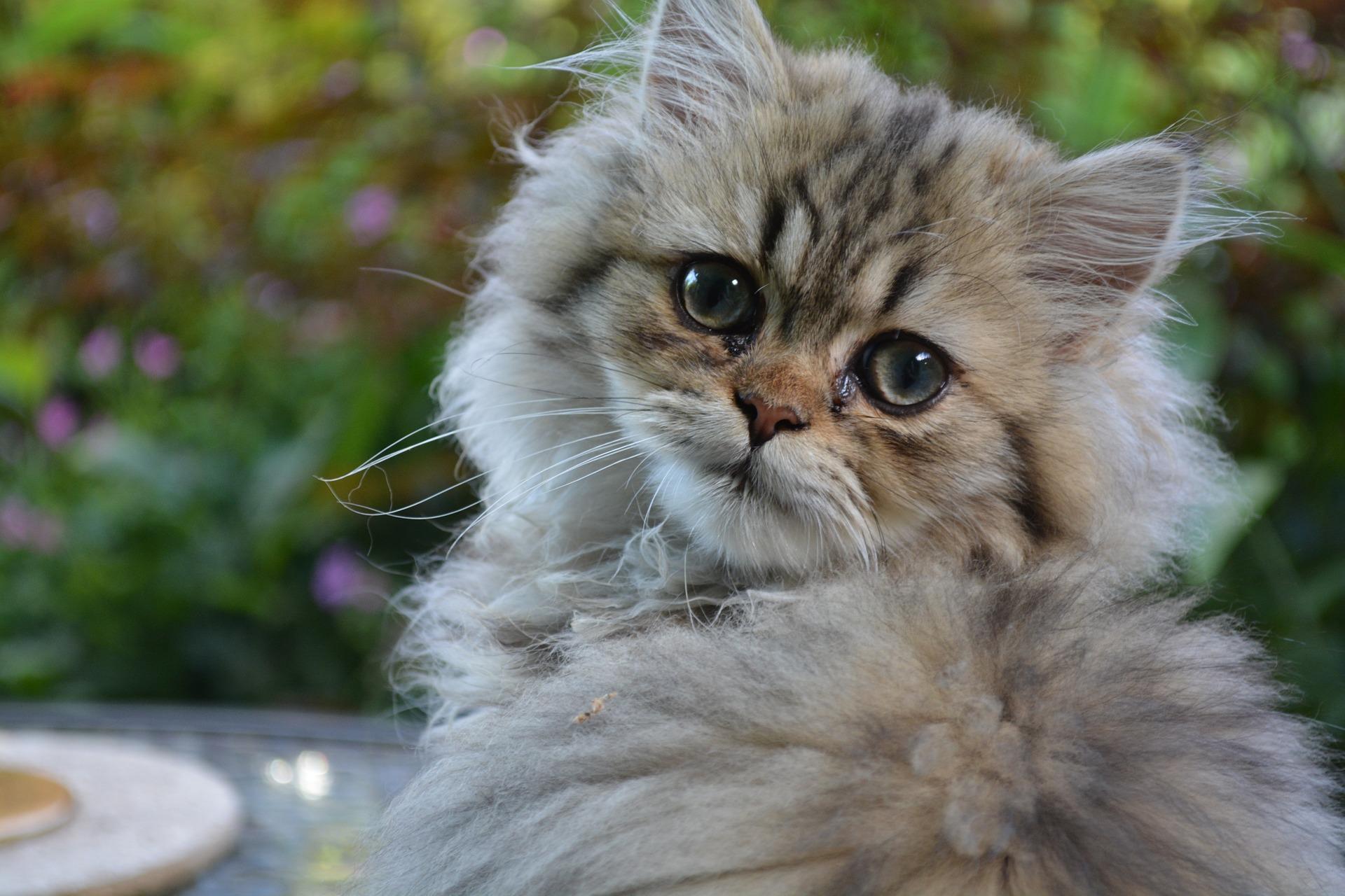 بالصور اجمل الصور للقطط في العالم , صور جميله للقطط في العالم 3105 2