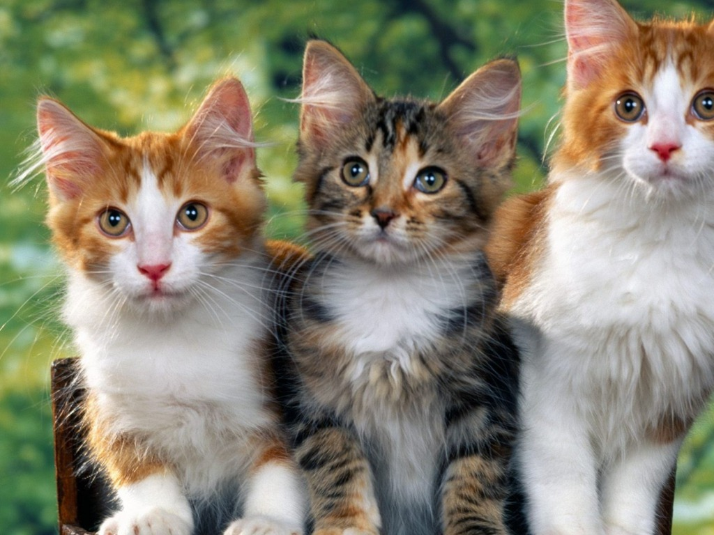 بالصور اجمل الصور للقطط في العالم , صور جميله للقطط في العالم 3105 3