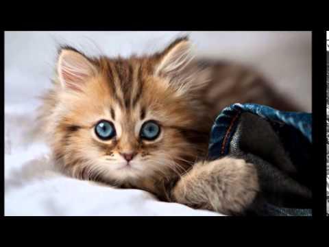 بالصور اجمل الصور للقطط في العالم , صور جميله للقطط في العالم 3105 5