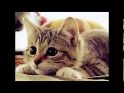 بالصور اجمل الصور للقطط في العالم , صور جميله للقطط في العالم 3105 6