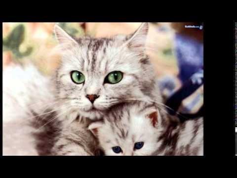 بالصور اجمل الصور للقطط في العالم , صور جميله للقطط في العالم 3105 7