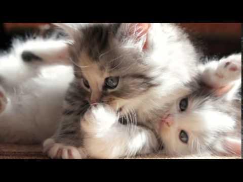 بالصور اجمل الصور للقطط في العالم , صور جميله للقطط في العالم 3105 8