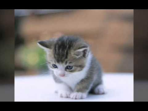 بالصور اجمل الصور للقطط في العالم , صور جميله للقطط في العالم 3105 9