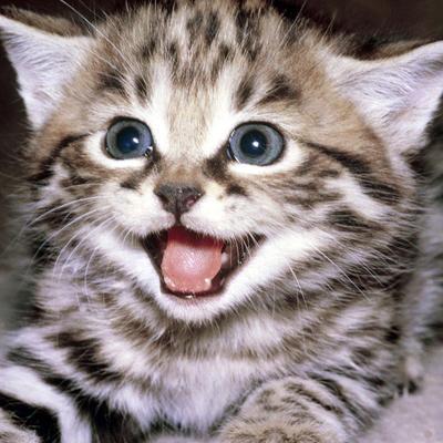بالصور اجمل الصور للقطط في العالم , صور جميله للقطط في العالم