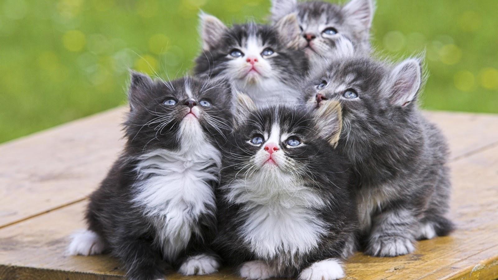 بالصور اجمل الصور للقطط في العالم , صور جميله للقطط في العالم 3105