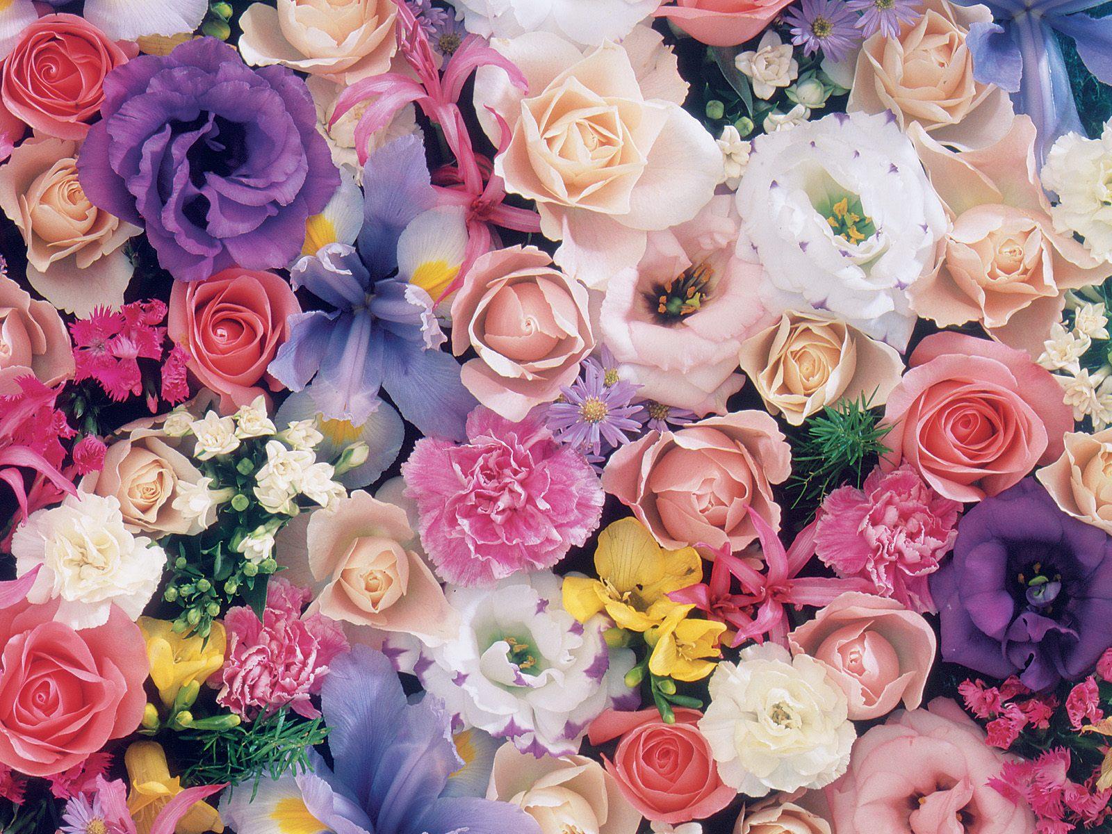 بالصور صور ورود جميلة , صور زهور جميله 3379 10