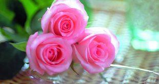 صور ورود جميلة , صور زهور جميله