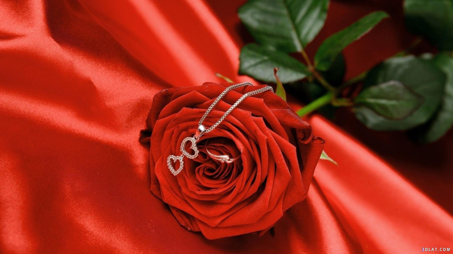 بالصور صور ورود جميلة , صور زهور جميله 3379 2