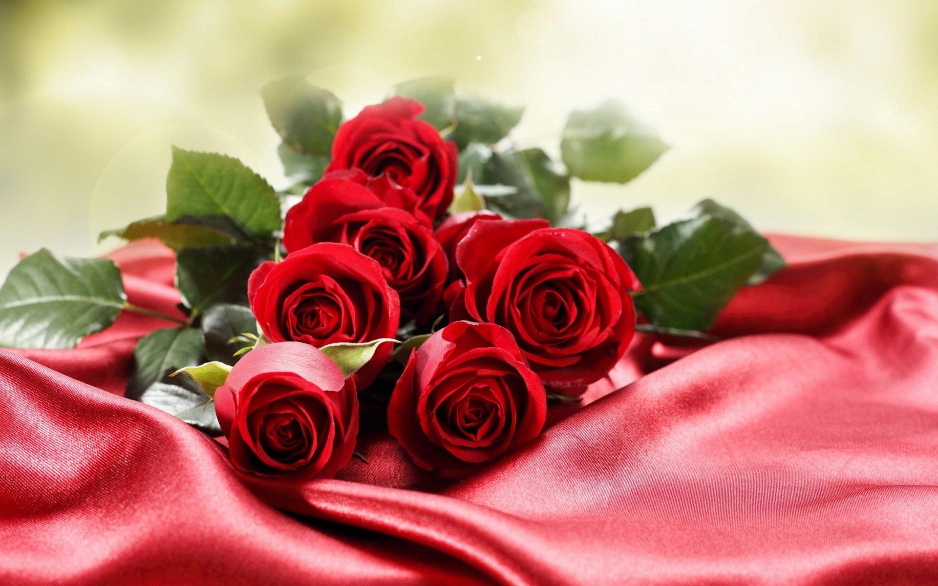 بالصور صور ورود جميلة , صور زهور جميله 3379 4