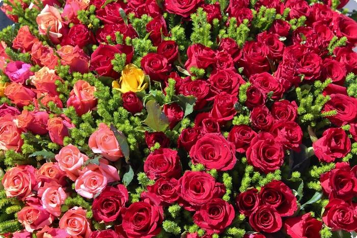 بالصور صور ورود جميلة , صور زهور جميله 3379 7