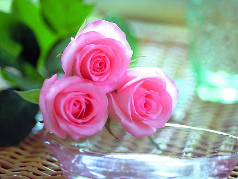 صور صور ورود جميلة , صور زهور جميله