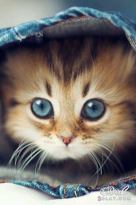 بالصور خلفيات قطط , صور قطط 3399 1