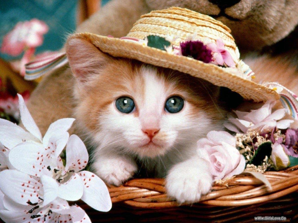 بالصور خلفيات قطط , صور قطط 3399 2