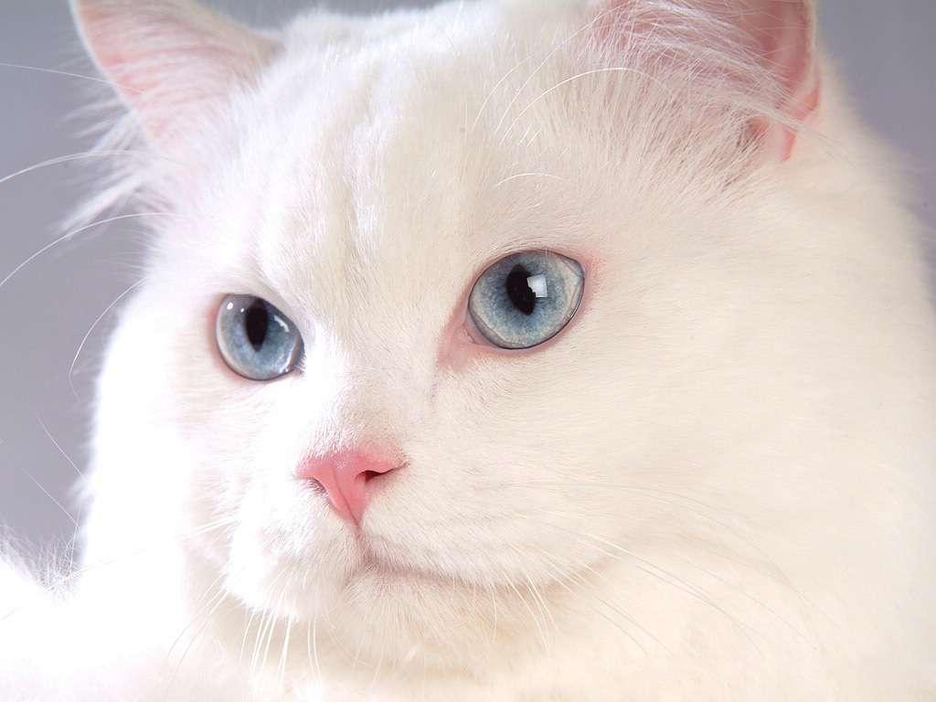 بالصور خلفيات قطط , صور قطط 3399 3