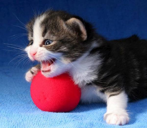 بالصور خلفيات قطط , صور قطط 3399 4