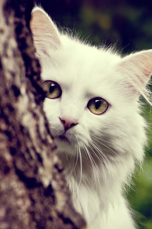 بالصور خلفيات قطط , صور قطط 3399 5