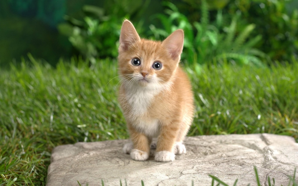 بالصور خلفيات قطط , صور قطط 3399 6
