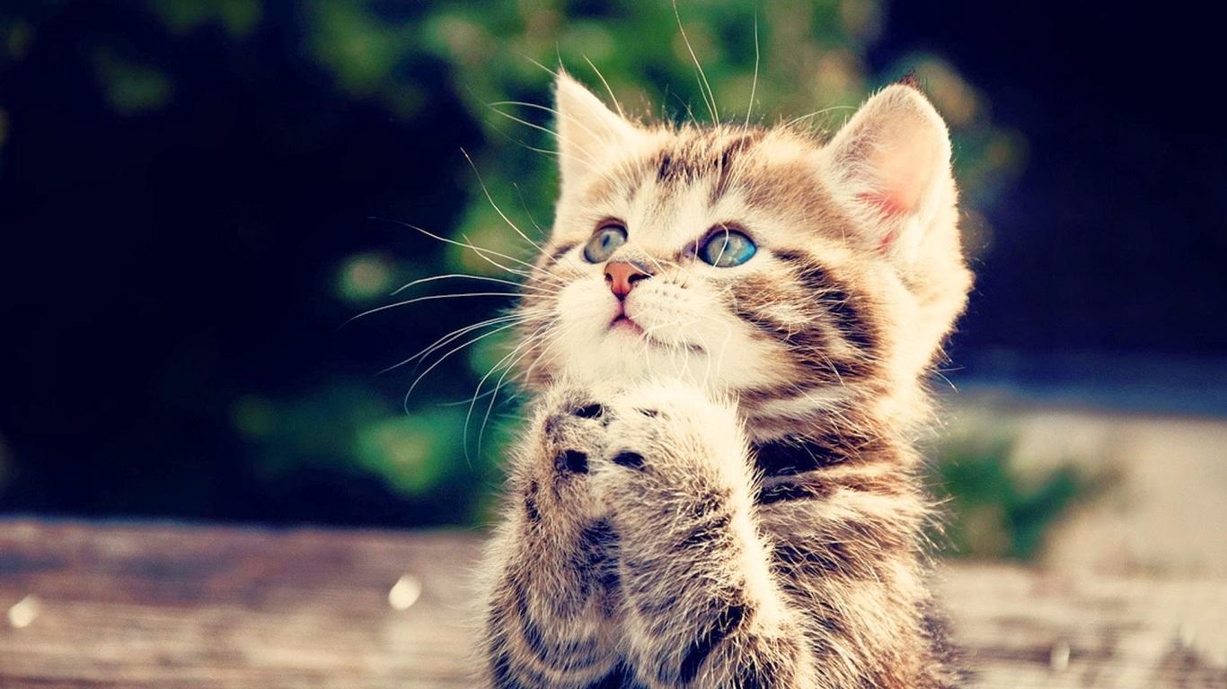 بالصور خلفيات قطط , صور قطط 3399 7