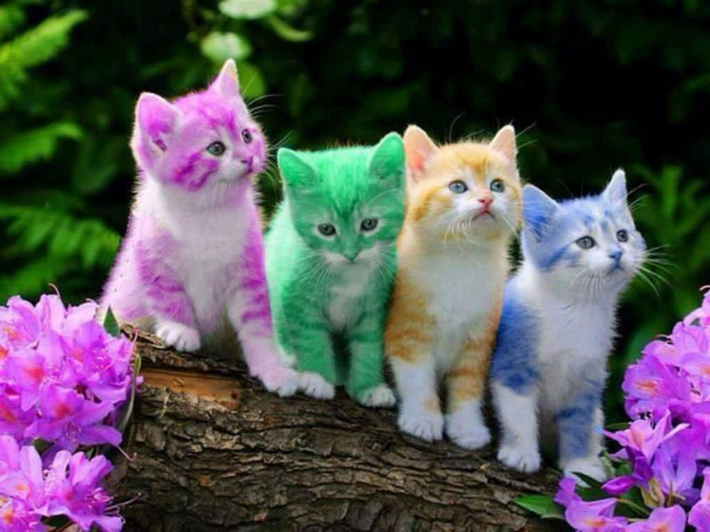 بالصور خلفيات قطط , صور قطط 3399 8