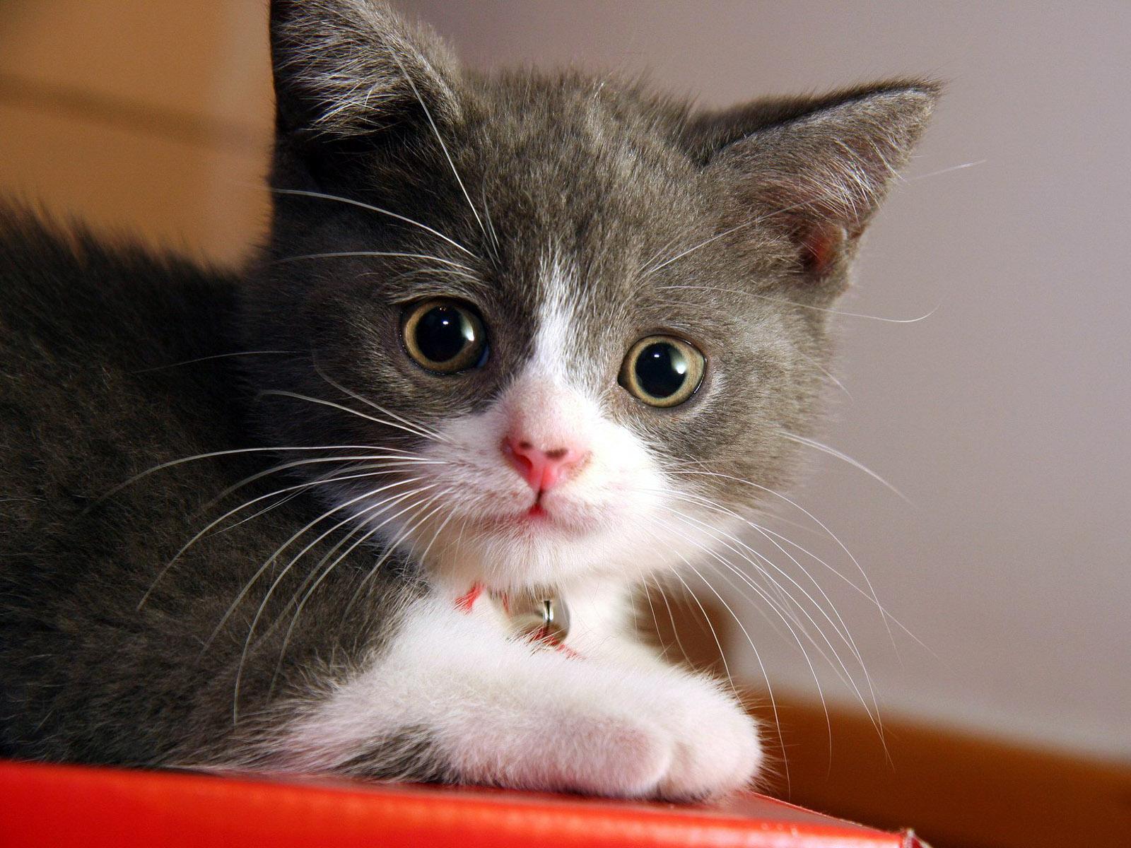 بالصور خلفيات قطط , صور قطط 3399 9