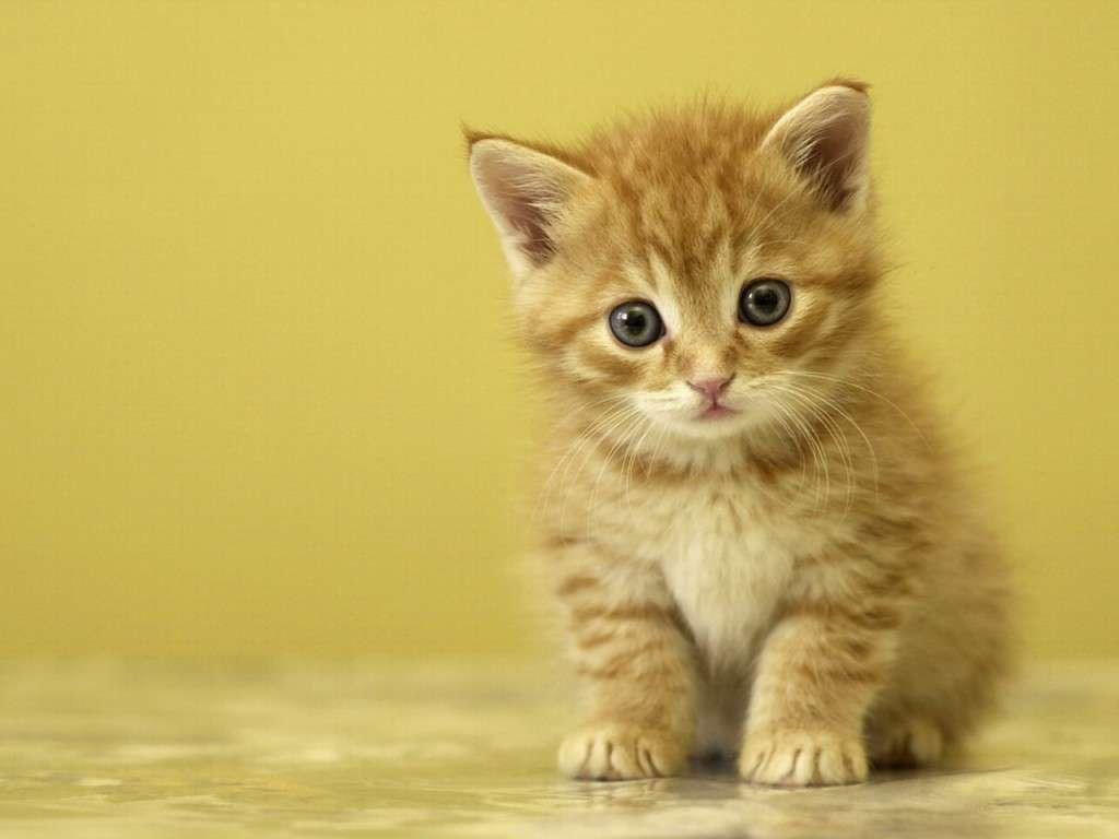 بالصور خلفيات قطط , صور قطط 3399
