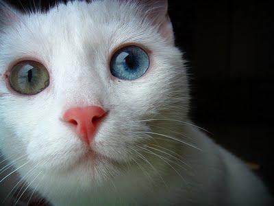 بالصور رؤية القطط بالمنام , معنى القطة فى الحلم 5228 1
