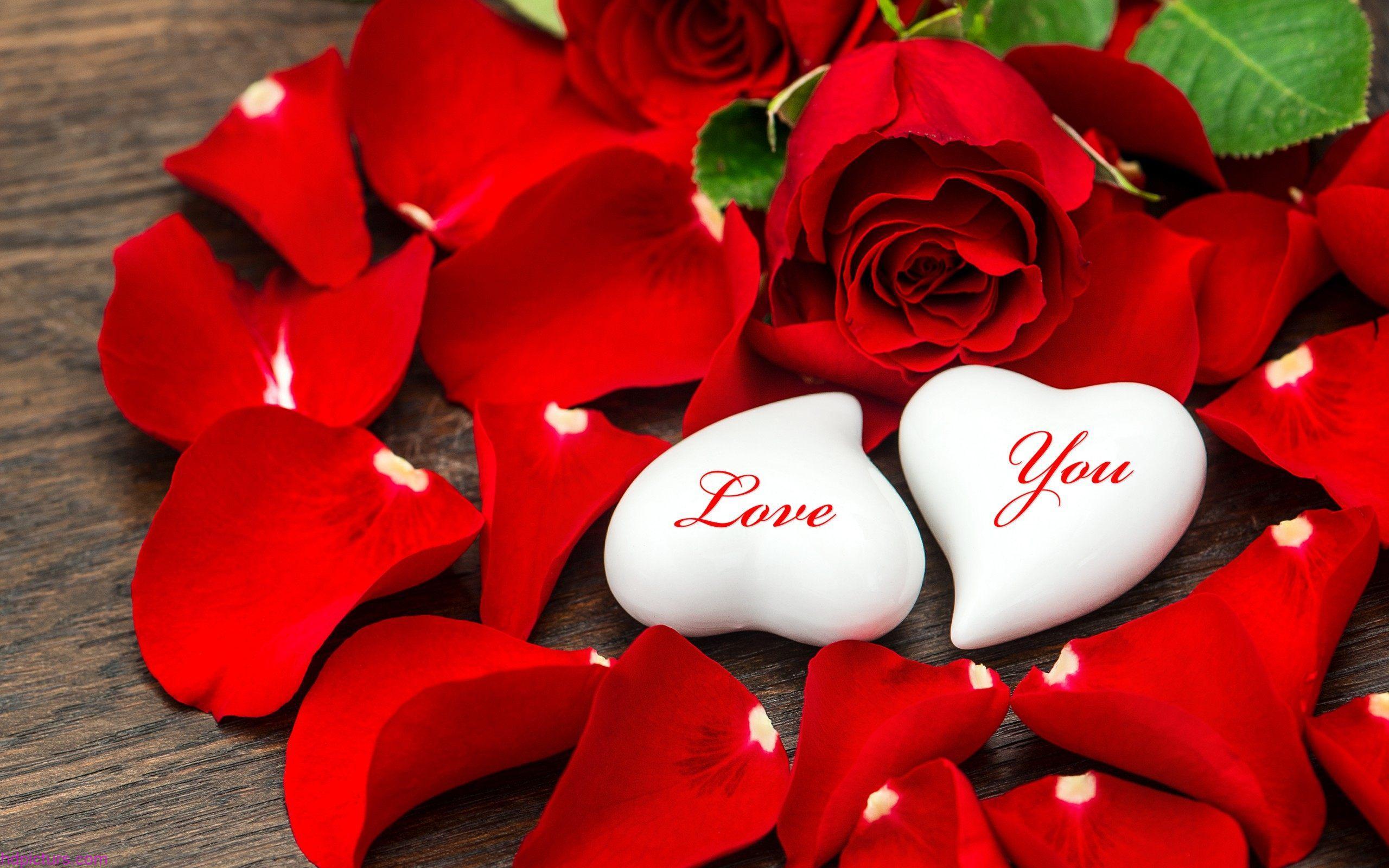 بالصور زهور الحب , الزهور احلى الهدايا 5728 2