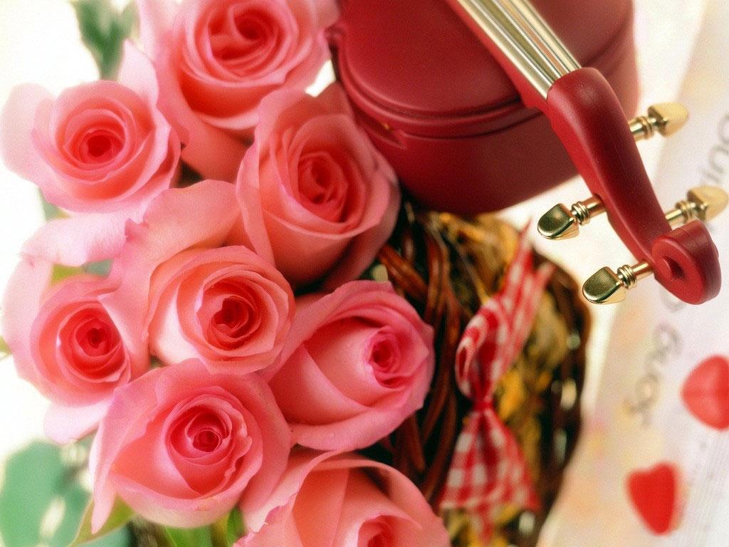 بالصور زهور الحب , الزهور احلى الهدايا 5728 3