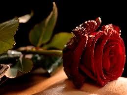 بالصور زهور الحب , الزهور احلى الهدايا 5728 5