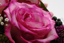 بالصور زهور الحب , الزهور احلى الهدايا 5728 6