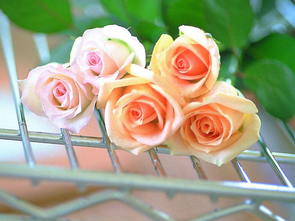 بالصور زهور الحب , الزهور احلى الهدايا 5728 8