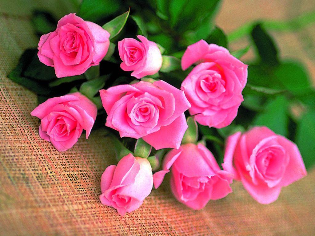 بالصور زهور الحب , الزهور احلى الهدايا 5728 9