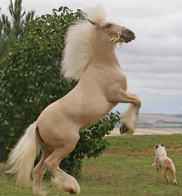 بالصور صور حصان , صور خيل حلوه 1178 10